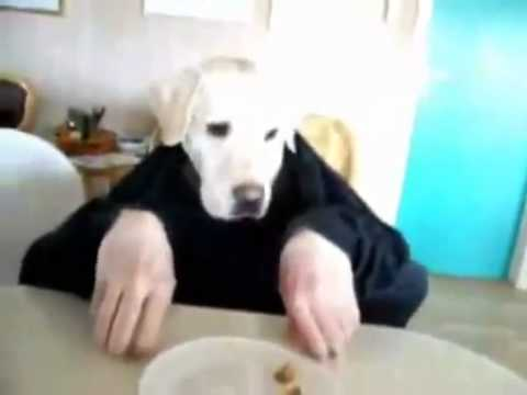 犬と二人羽織してみた 【アニマルビデオ】