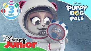 Puppy Dog Pals | Summer Music Videos 🎶 | Disney Junior UK
