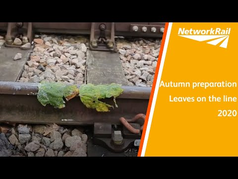 Autumn Preparation - Leaves On The Line