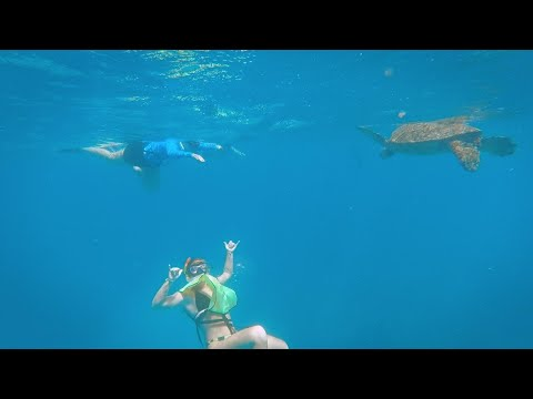 Turtle Canyon Snorkel