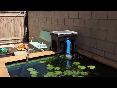Solar Powered Pond Pump And Outdoor Lighting