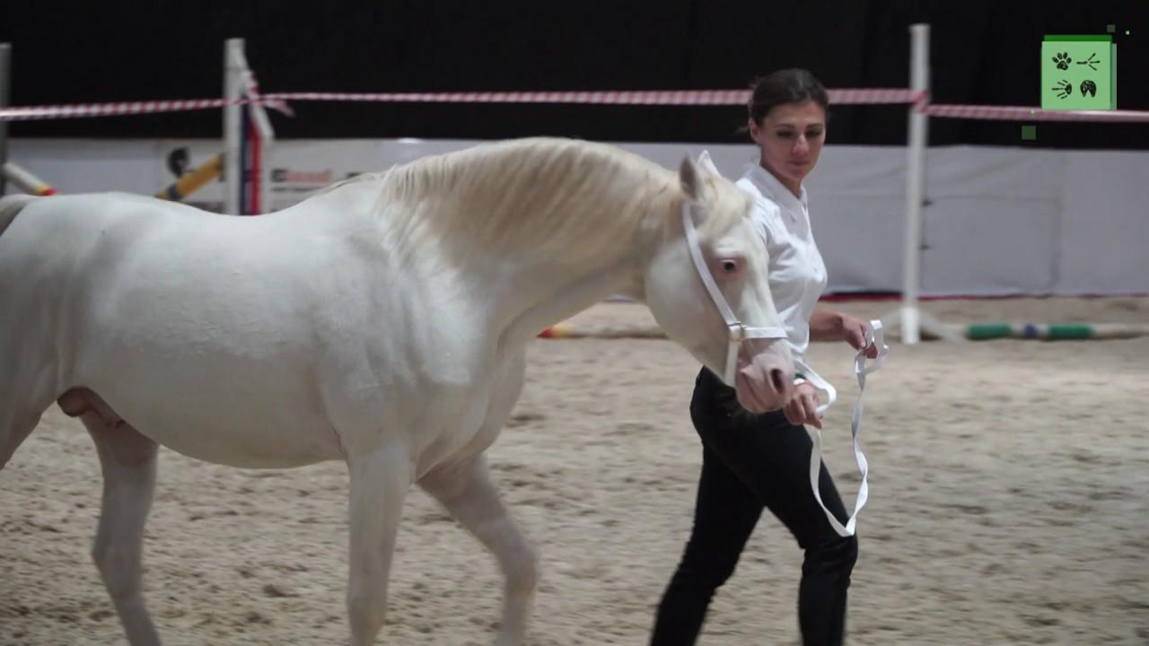Именно поэтому, задаваясь вопросом «где купить седло для лошади», стоит. (в том числе и седла для пони);; из натуральной и искусственной кожи,