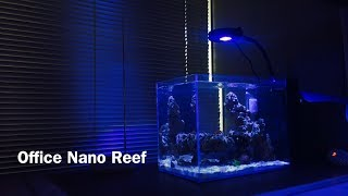 9G Peninsula Nano Reef | Maturing & Making Moves