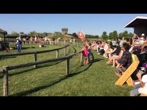 Farmer Fred Leads A July Pig Race! Harbes Farm In Mattituck