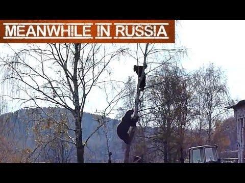 Bear Chases Man Up a Tree