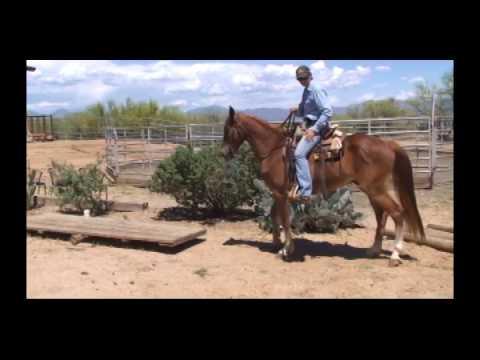 Buckshot- Missouri Fox Trotter Gelding