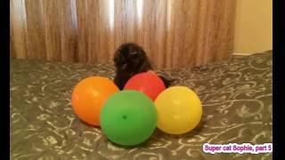 Кошка играет с воздушными шариками