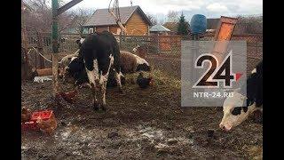 В Нижнекамском районе фермер сжигает трупы животных у себя во дворе