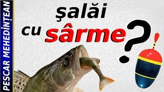 Salau de Dunare contaminat. - Forumul Softpedia