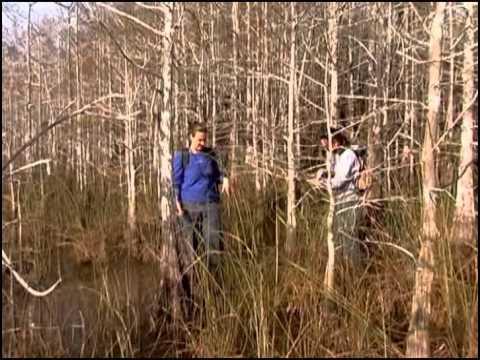 Waterways Episode 257 - Exploring the Everglades