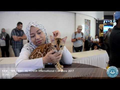 KKM / FIFE / BRIT - KL Tower International Cat Show 2017 - Part 1