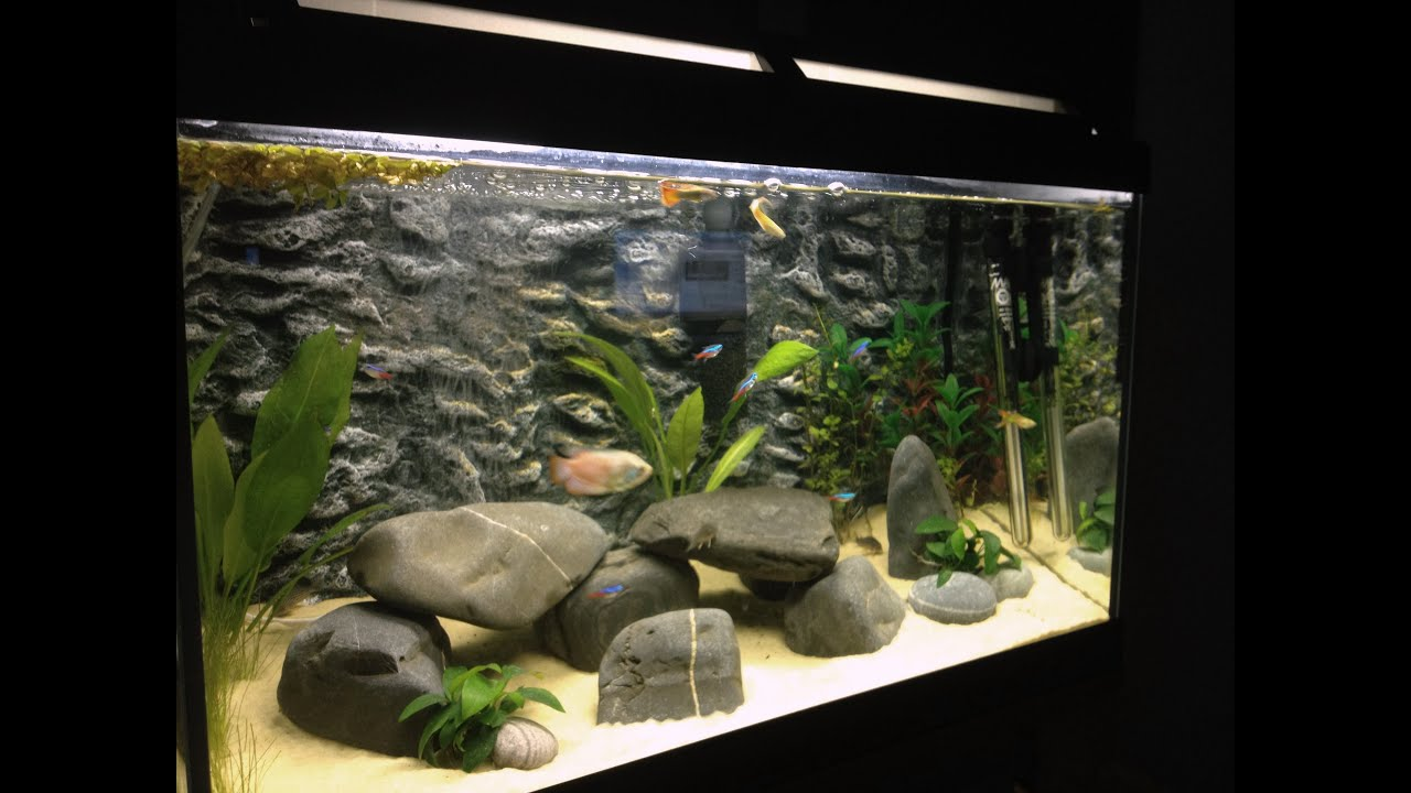 Tropical fish tank 60 litre youtube for Decoration aquarium 60 litres