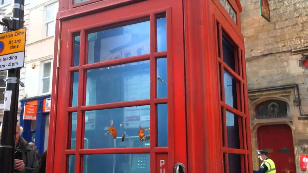 La Cabine Téléphonique Aquarium Version Anglaise Youtube