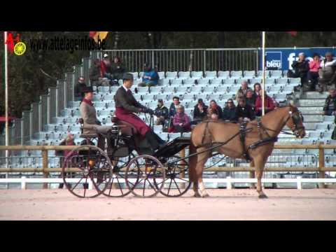 Gilles Pirotte (Bel) - Dressage - WPDC PAU 2013