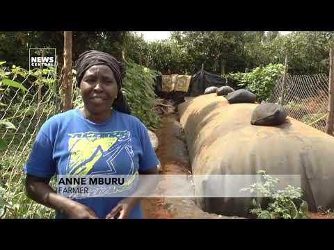 Renewable Energy in Africa | Kenyan farmers turn cow dung into renewable energy | News Central TV