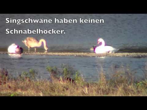 Vögel am Leinepolder / Birds at the Leine-River
