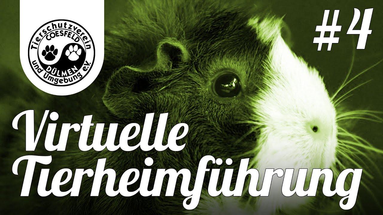 Tierheim Coesfeld Lette Hunde