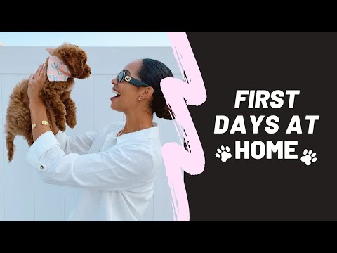 LABRADOODLE PUPPY'S FIRST DAYS AT HOME | FARAHPINK 🐾