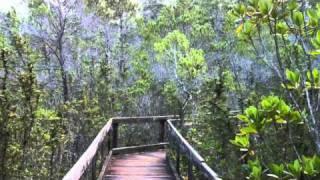 Jenny Pygmy Forest