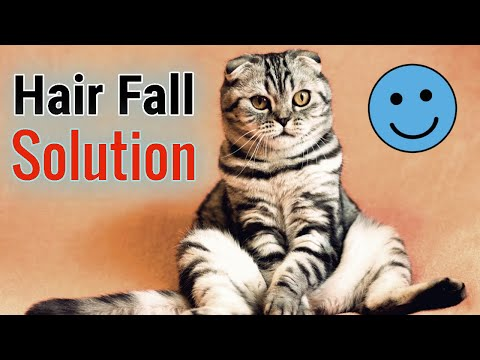 Cat Hair Fall Solution   Pet Care Tips