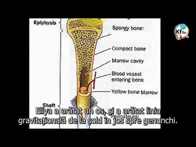 Structura osului este dictata de partea emotionala a creierului
