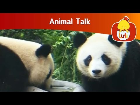 Animal Talk | The world of the panda | Cartoon for Children - Luli TV from YouTube · Duration:  4 minutes 59 seconds
