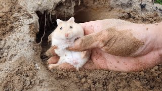 Raid The Hamsters Lair / 洞窟でハムスターを捕まえる