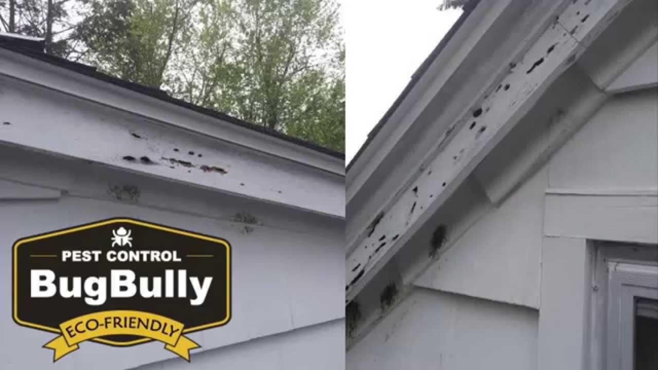 Bad Carpenter Bee Damage Worcester MA