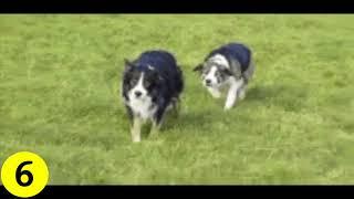 Funny Dog Gifs Compilation #1   Gifs Chan
