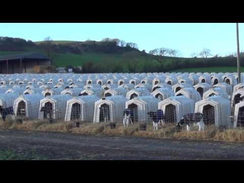 UK dairy farm investigation 2017