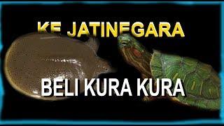 BELI KURA KURA DI PASAR JATINEGARA