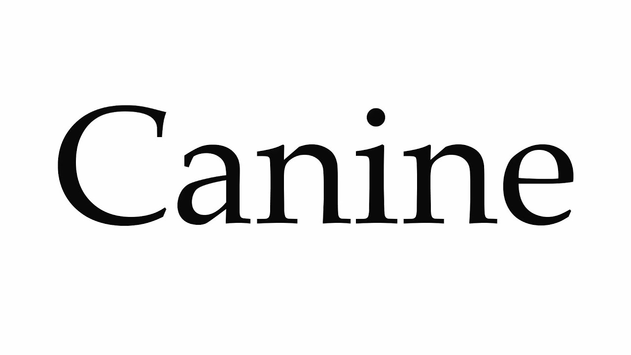 How to Pronounce Canine