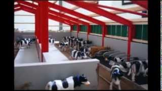 Model Farm Cattle Shed Part 1