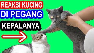 Download MENGEJUTKAN, REAKSI KUCING KEPALANYA DI PEGANG KUCING LAIN