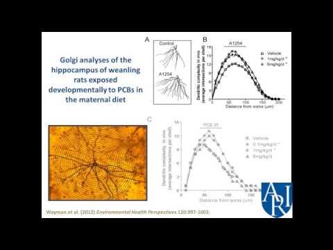 Environmental Toxins & Autism Spectrum Disorder - P. Lein, PhD