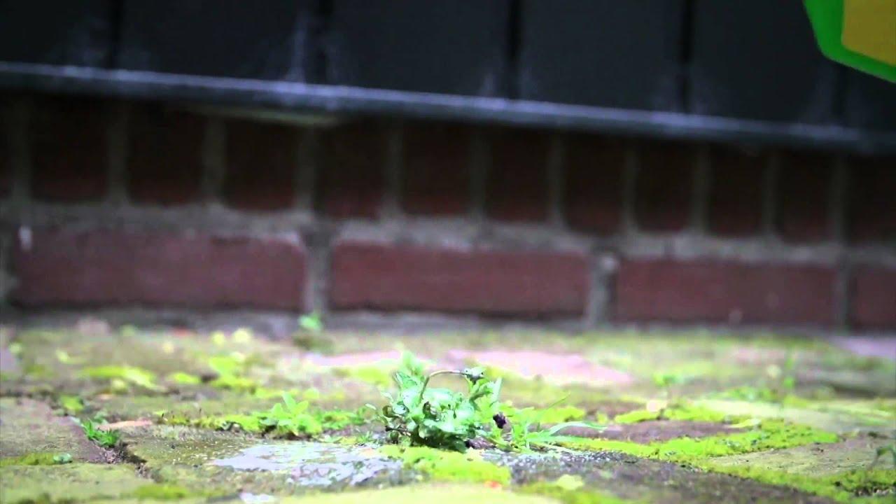 onkruid verwijderen met stoom tuin