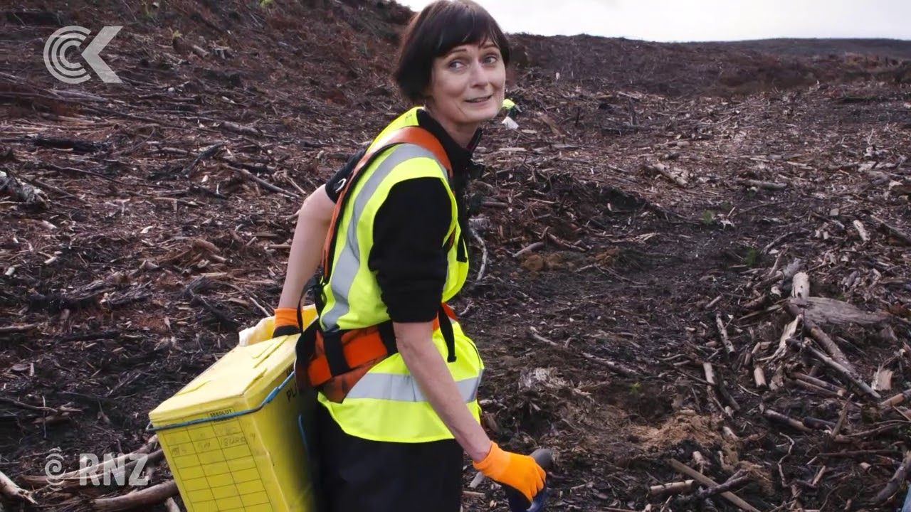 How hard is it to plant trees for a living? Lisa Owen finds out