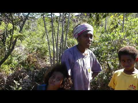 """Reportage sur le programme """"Palmiers et Conifères de Nouvelle-Calédonie"""" de Noé - EPISODE 2"""