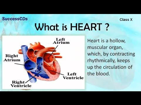 HUMAN HEART | CBSE Class X Science Lesson - YouTube