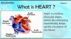 HUMAN HEART | CBSE Class X Science Lesson