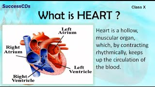 HUMAN HEART | CBSE Class X Science Lesson