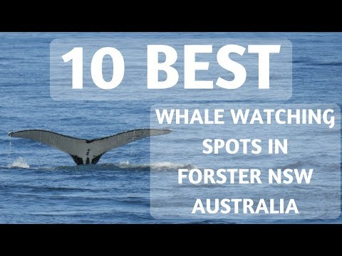 10 Best Whale Watching Spots In Forster NSW Australia