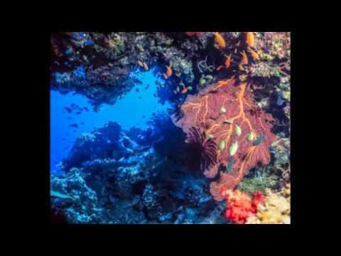 Ocean Conservation: Marine Video Cameras