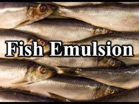 How To Use Fish Emulsion