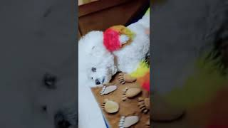 Look at these cute and funny puppies dogs 3171