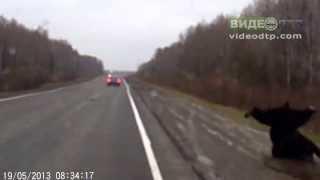 Мужик сбил медведя   ДТП авария 720p