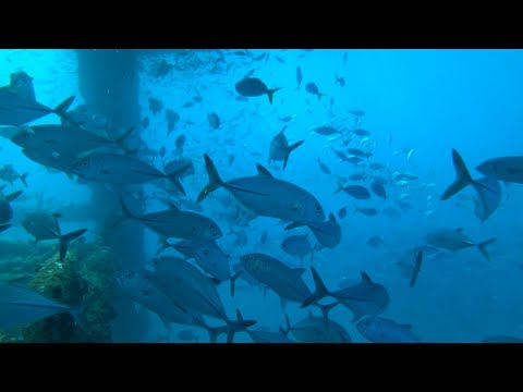Fish habitats created by North West offshore infrastructure