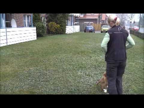 Navii Training mit Elster und Taube