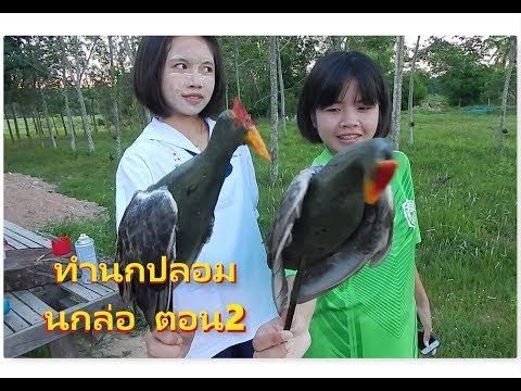 ตอนที่2 วิธีทำ นกอีลุ้มปลอม สำหรับ ต่อนกตูม ต่อนกอีลุ้ม