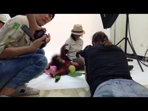 making of life on White at Taipei. We have photograph a young Orangutan